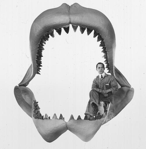 Megalodon jaws - Bashford Dean 1909