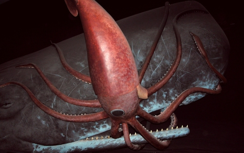 Sperm Whale and Giant Squid Locked in Mortal Combat